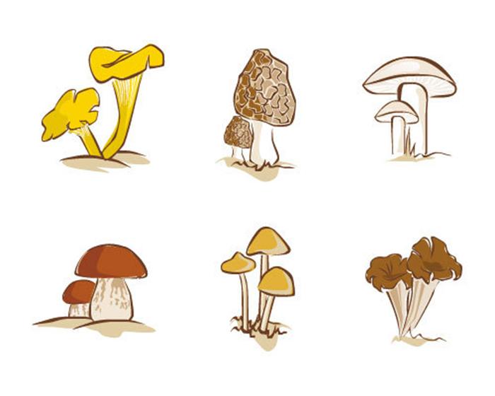 Fungicultura2