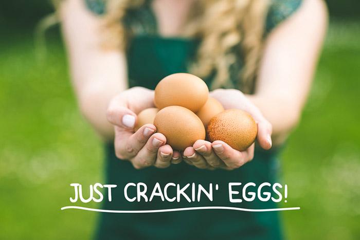 Field Farm Eggs2