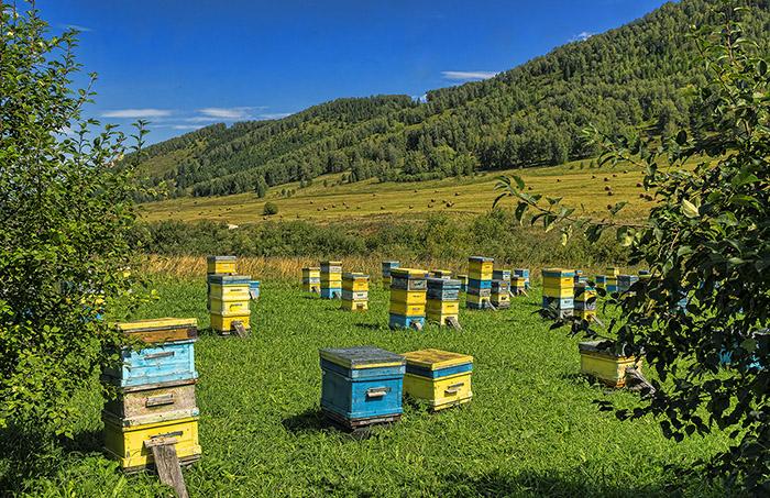 honey-project2
