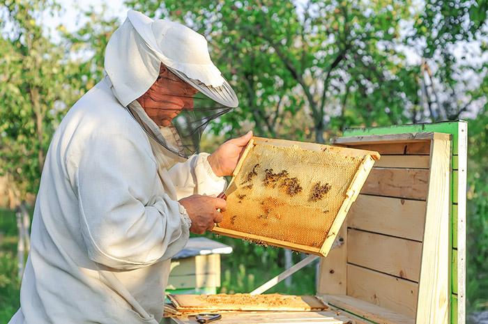 honey-project5